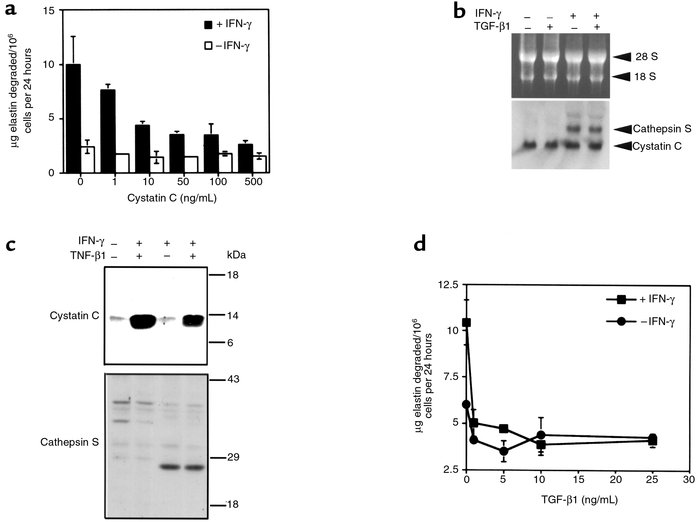 Regulation of SMCs elastase activity by cystatin C. (a) SMC elastase act...