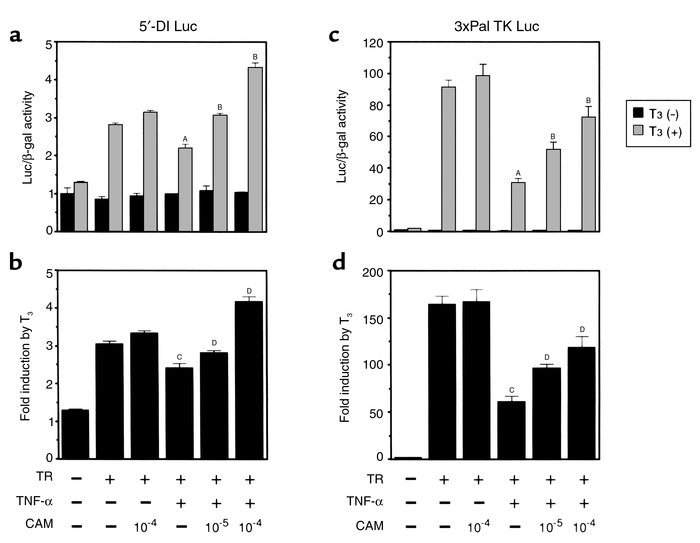 CAM counteracts the inhibition of T3-responsive luciferase reporter-gene...