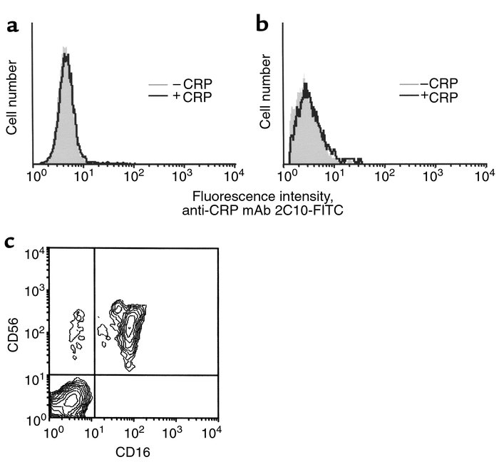 Binding of CRP to FcγRIIIa on NK cells is not detectable. NK cells expre...
