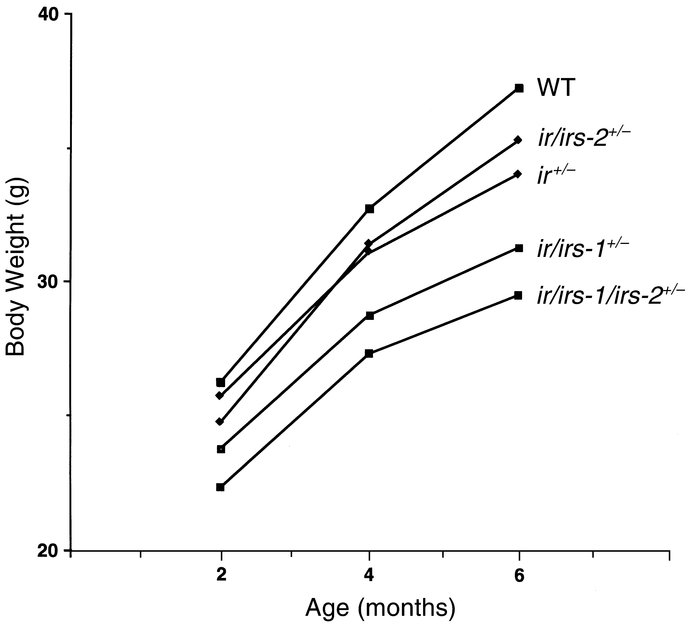 Growth curves of mutant mice. Mice were weighed at 2, 4, and 6 months. E...