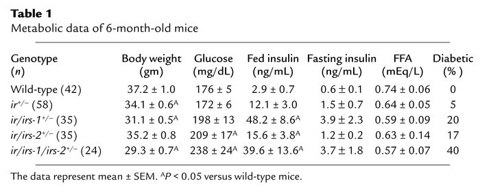 Metabolic data of 6-month-old mice