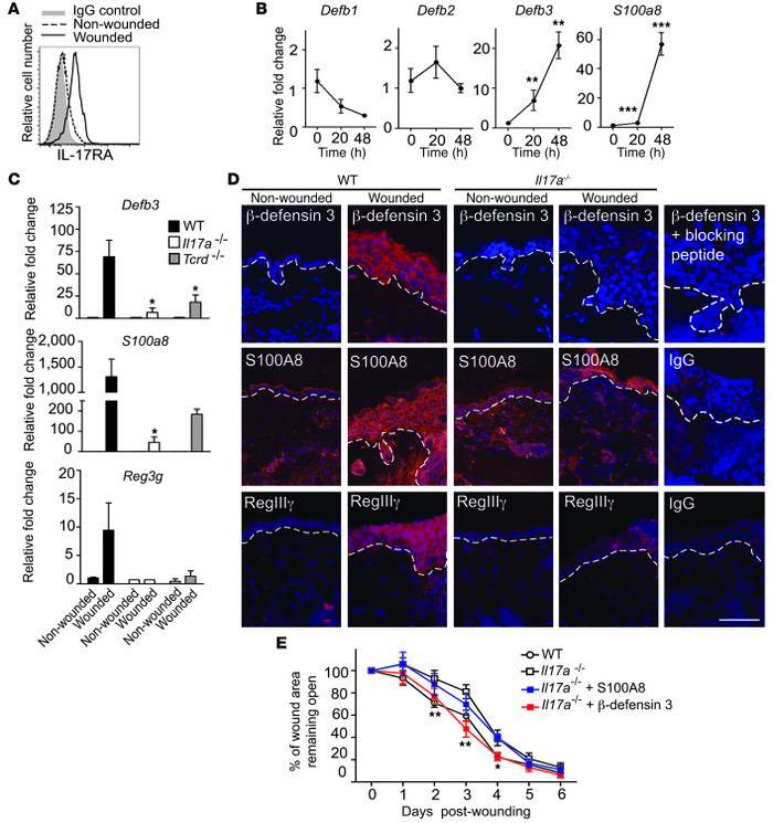 IL-17A is critical for induction of epidermal host-defense molecules to ...