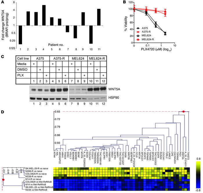 WNT5A expression is increased in response to chronic inhibition of BRAFV...