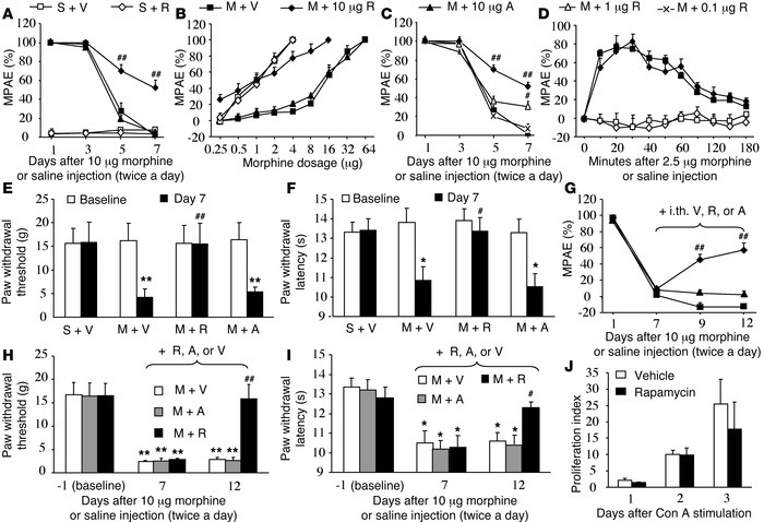 Intrathecal rapamycin attenuates the development and maintenance of morp...