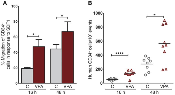 Effect of VPA on CD34+ cell migration and homing. (A) SDF1 (100 ng/ml) i...