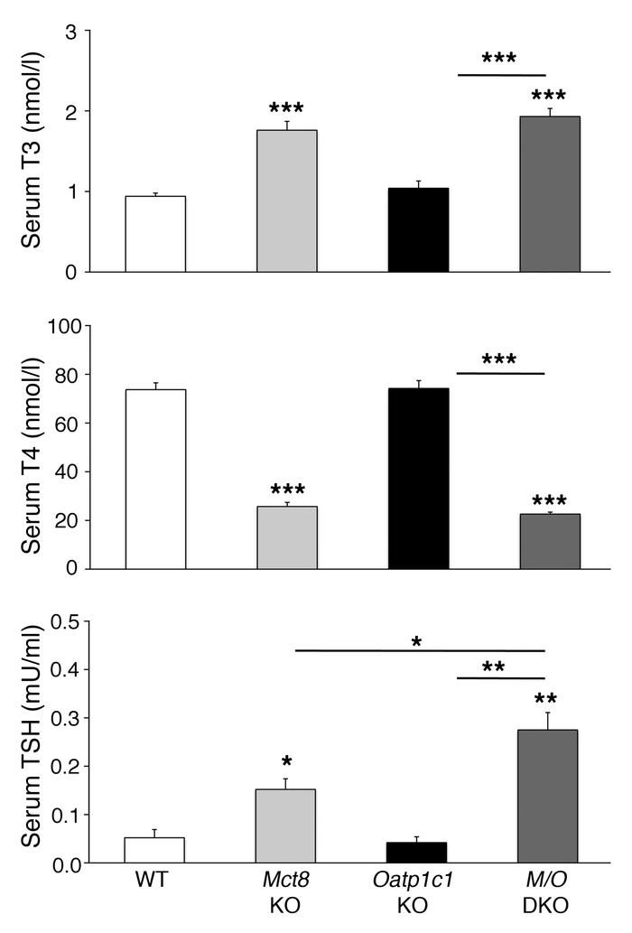 Abnormal serum TH and TSH concentrations in Mct8/Oatp1c1 DKO mice.   Ser...