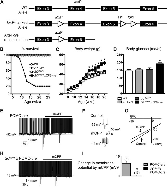 Generation and validation of 2Cflox/Y mice.   (A) Strategy used to creat...