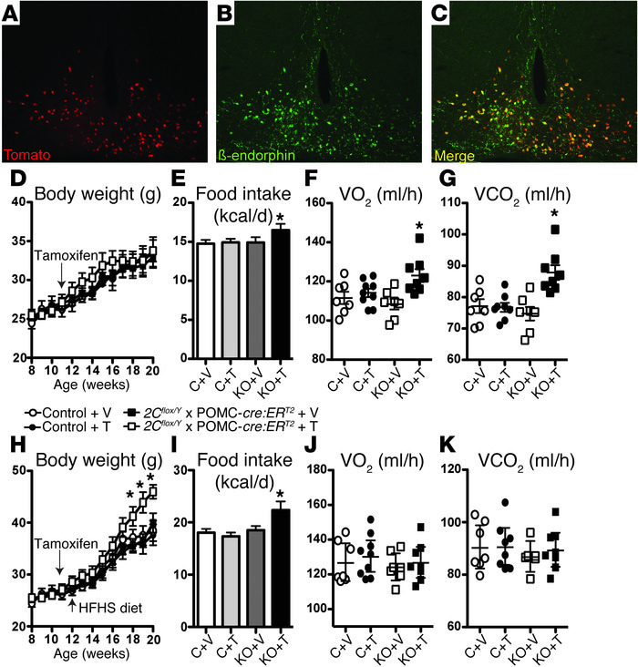 Inducible deletion of serotonin 2C receptors (Htr2c) in POMC neurons of ...