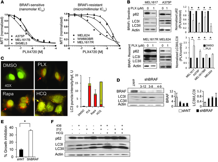 BRAFi induces cytoprotective autophagy. (A) Dose-dependent growth impair...
