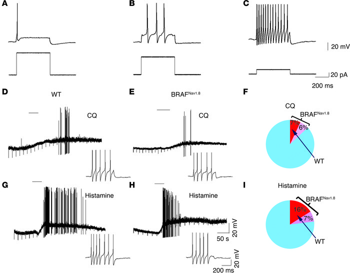Electrophysiological characterization of DRG cells from BRAFNav1.8 mice ...