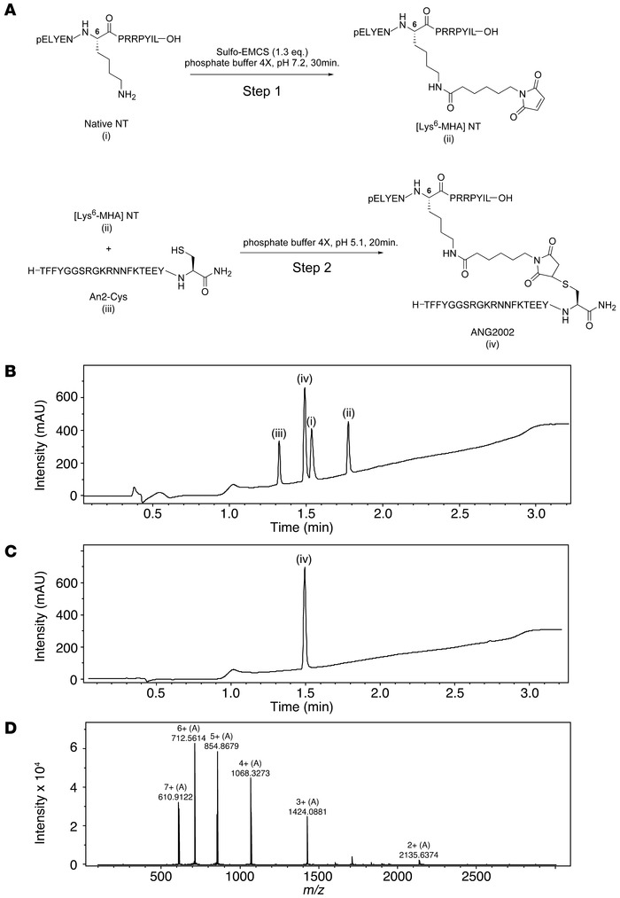 Synthesis and purification of ANG2002. (A) A sulfo-N-[ε-maleimidocaproyl...