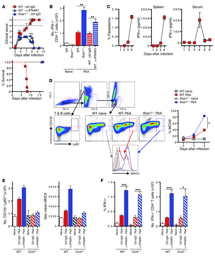 Type I IFN signaling limits Th1 responses during experimental severe mal...