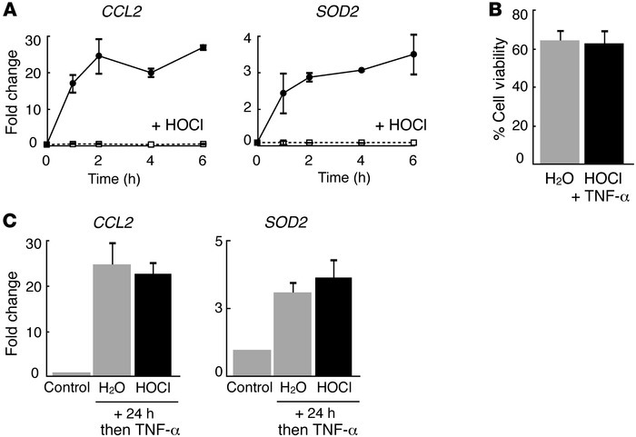 HOCl reversibly inhibits TNF-α–stimulated NF-κB–dependent gene expressio...