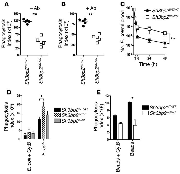 Macrophages from 3BP2-deficient and cherubic mice display impaired phago...