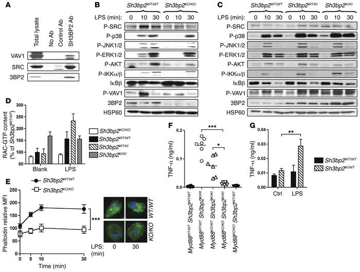 TLR4 signaling is impaired in macrophages from 3BP2-deficient and cherub...
