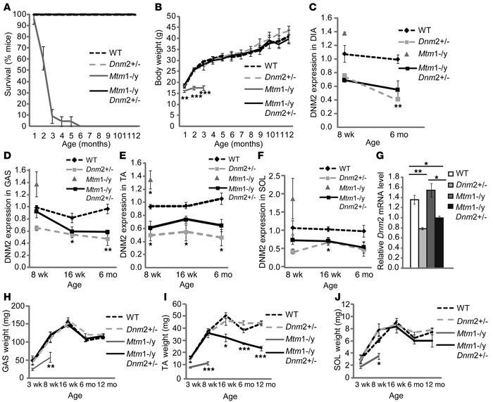 Reduced DNM2 expression greatly rescues the life span of Mtm1–/y mice.  ...