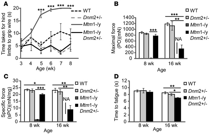 Improved muscle strength and endurance of Mtm1–/y mice with reduced DNM2...