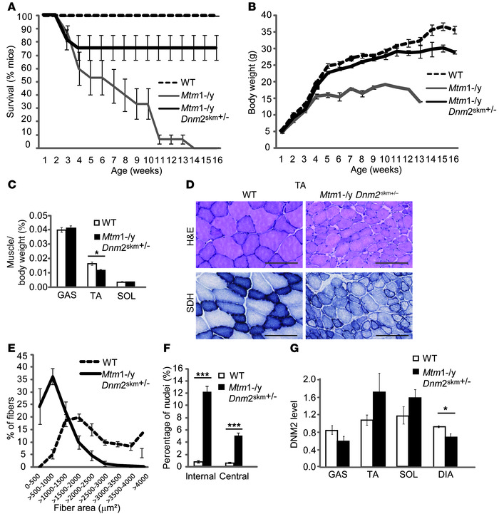 Reducing DNM2 in skeletal muscle alone ameliorates the life span and pat...