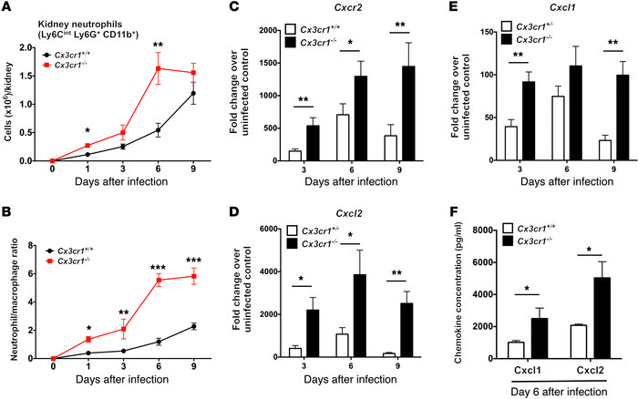Cx3cr1 deficiency is associated with increased accumulation of neutroph...