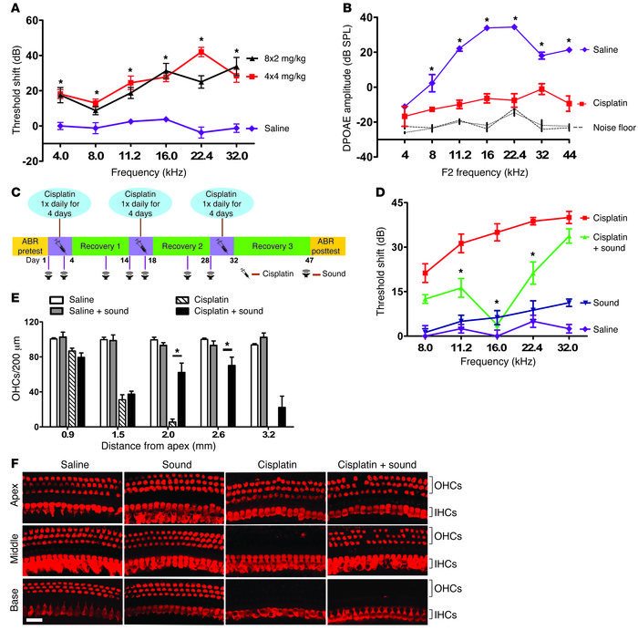 Sound preconditioning protects against cisplatin ototoxicity. (A) Mouse ...