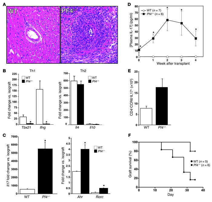 Pf4–/– mice have an exaggerated Th17 response to cardiac transplantatio...