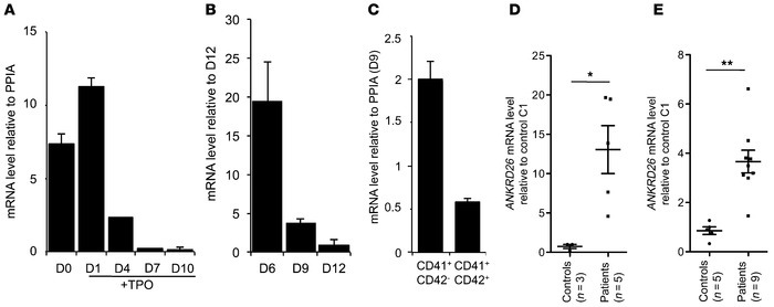 ANKRD26 expression is maintained during megakaryopoiesis of THC2 patient...
