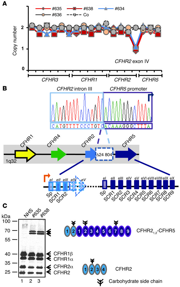 A novel chromosomal deletion in the CFHR2 gene of 2 related patients wit...