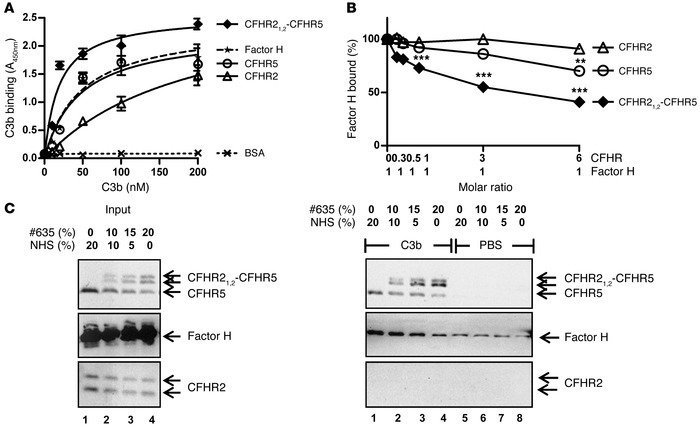 The CFHR21,2-CFHR5 hybrid protein interacts with C3b.   (A) Recombinant ...