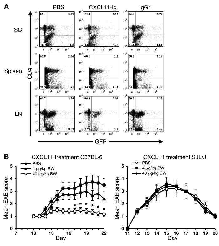 Effects of CXCL11 therapy on CD4+ T cell recruitment and EAE suppression...