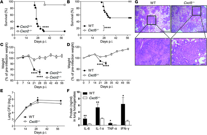 Absence of CXCL5 or its receptor CXCR2 protects from TB-associated wasti...