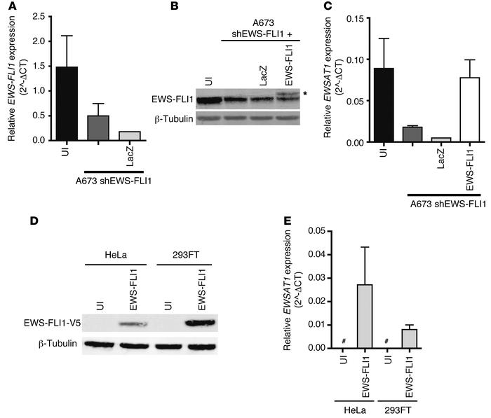 Expression of EWSAT1 is dependent on EWS-FLI1 and independent of the cel...