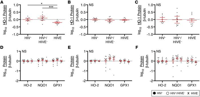 HO-1 is deficient in the striatum of HIV-infected subjects with HIVE. HO...