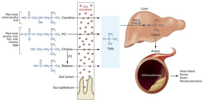 Nutrient/meta-organismal pathway associated with atherosclerosis and maj...