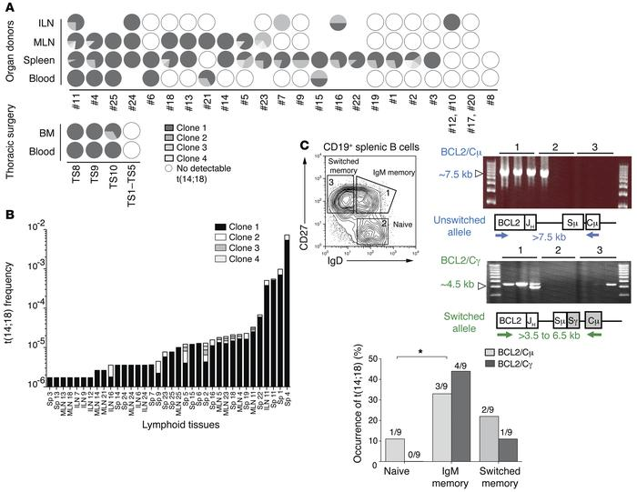 Molecular characterization of resident t(14;18)+ cells in lymphoid organ...