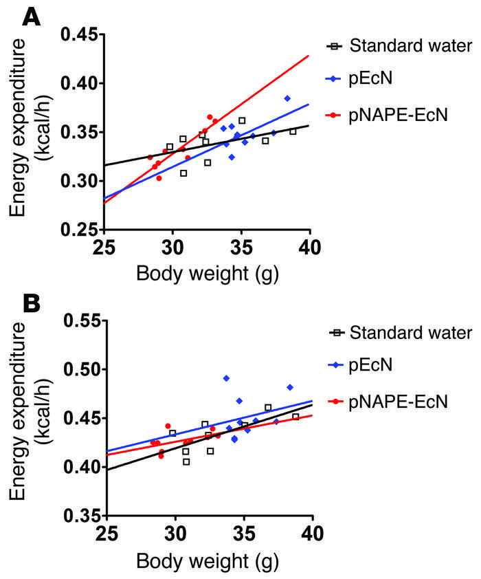 Effect of pNAPE-EcN treatment on energy expenditure. (A) Energy expendit...