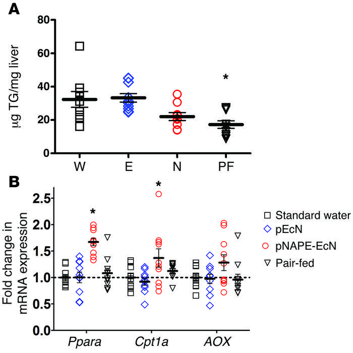 Pair-feeding does not induce hepatic expression of fatty acid oxidation ...