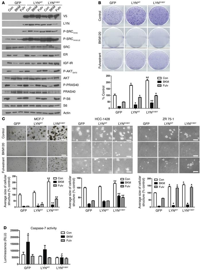 LYND189Y accelerates hormone-independent growth and counteracts the effe...