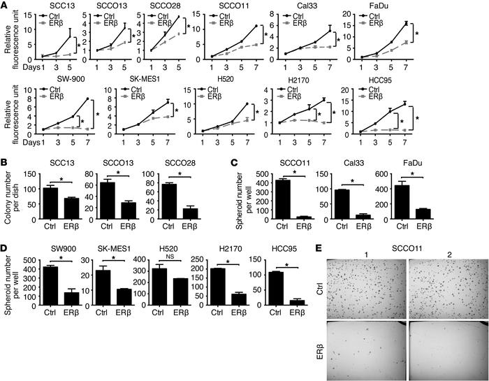 Elevated ERβ expression suppresses proliferation of skin, lung, and oral...