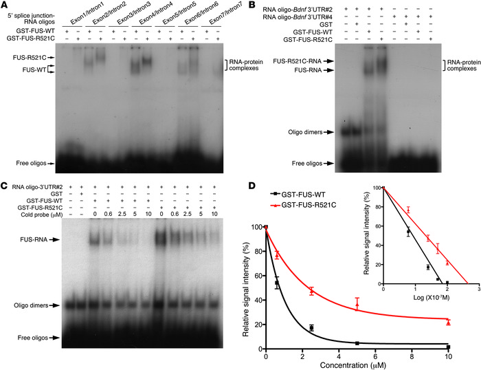FUS-R521C proteins form more stable complexes with Bdnf RNA and reduce s...