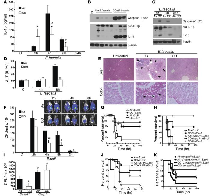 CO acts therapeutically to inhibit lethal sepsis via the inflammasome. (...