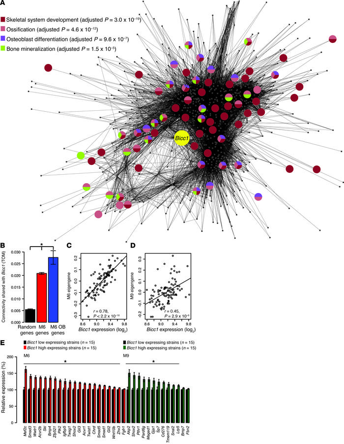Network analysis predicts that Bicc1 plays a role in osteoblast differen...