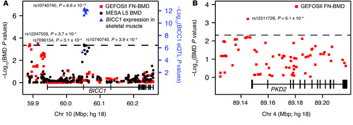 Variants in human BICC1 and PKD2 are association with BMD. Plotted are t...