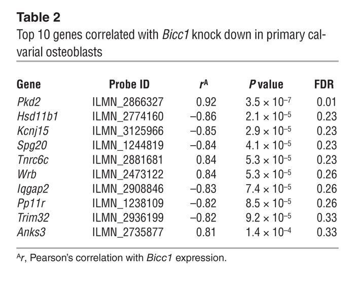 Top 10 genes correlated with Bicc1 knock down in primary calvarial osteo...