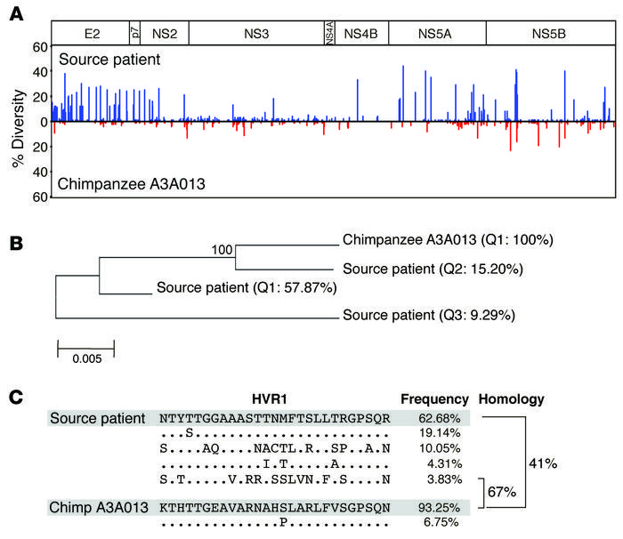 Transmission of a minor quasispecies with a unique HVR1 sequence. (A) Co...