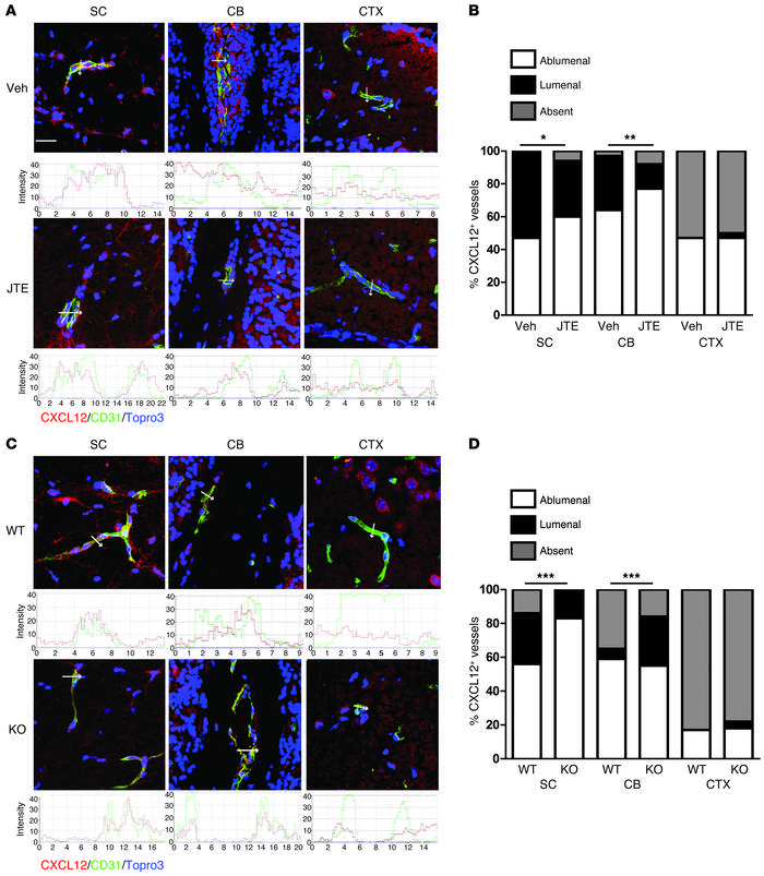 In vivo S1PR2 inactivation preserves BBB polarity during EAE. Detection ...