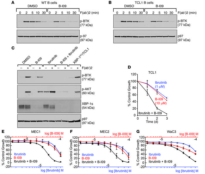 B-I09 mimics genetic Xbp1 knockout in compromising BCR signaling, and ex...