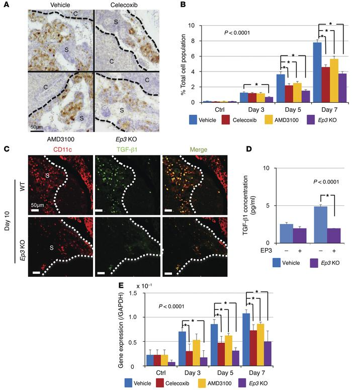 COX-2–derived PGE2-EP3 signaling induces LNM by facilitating the accumul...