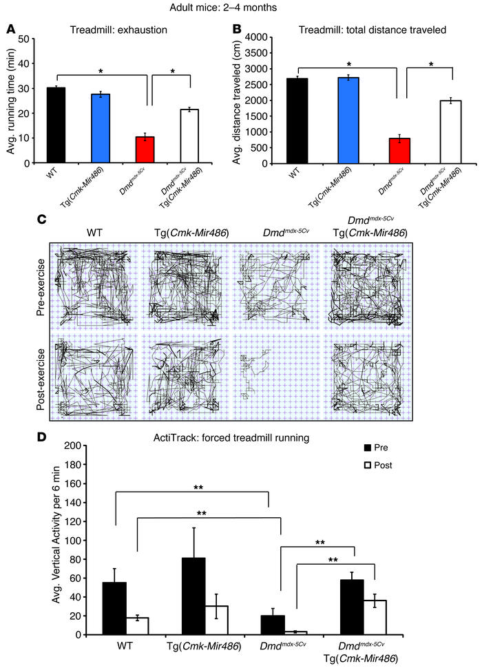 miR-486 overexpression in Dmdmdx-5Cv mice improves dystrophic muscle phy...