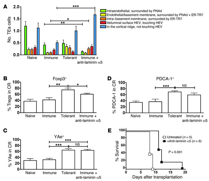 Targeting LN stromal fiber laminin α5 interferes with the induction of i...