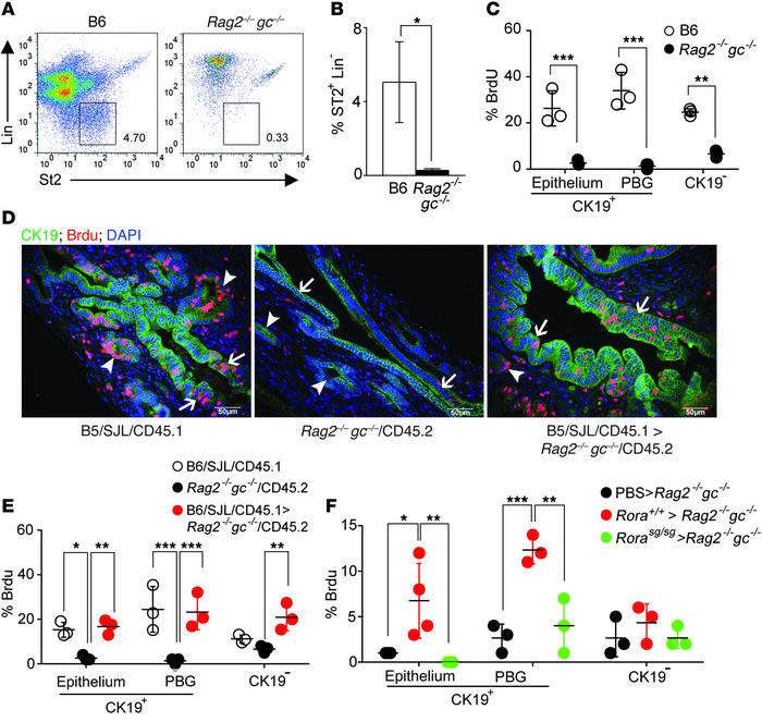 ILC2s mediate IL-33–induced cholangiocyte proliferation. (A) Representat...
